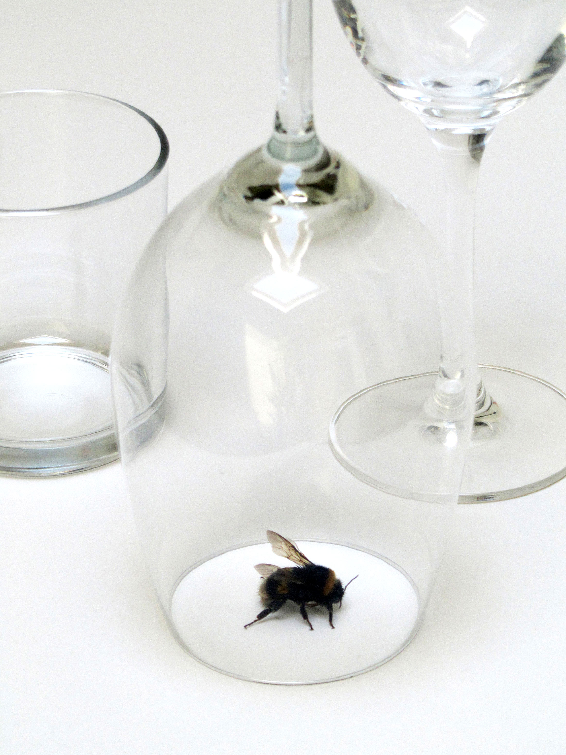 peter de meyer, installation, bumblebee, wine glass, art to explore and collect