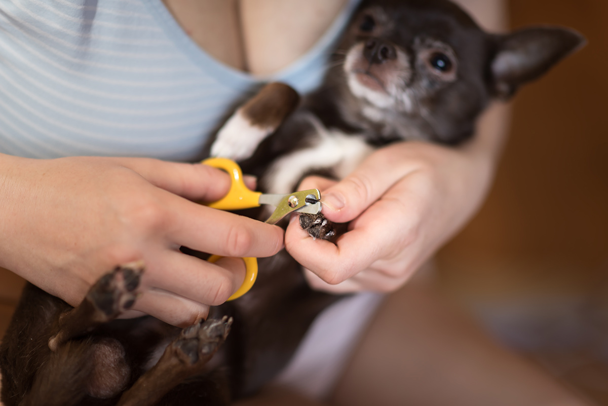 Photo demonstrating how to hold a dog paw to isolate a nail for trimming.