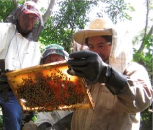 Mejora de las condiciones socioambientales de la población del municipio de Las Vueltas del departamento Chalatenango.  a través de prácticas agropecuarias sostenibles y manejo adecuado de los desechos sólidos.