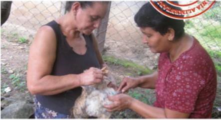 Fortalecimiento de las capacidades técnicas y productivas de mujeres pequeñas productoras en cinco municipios de los departamentos de Jinotega y Matagalpa