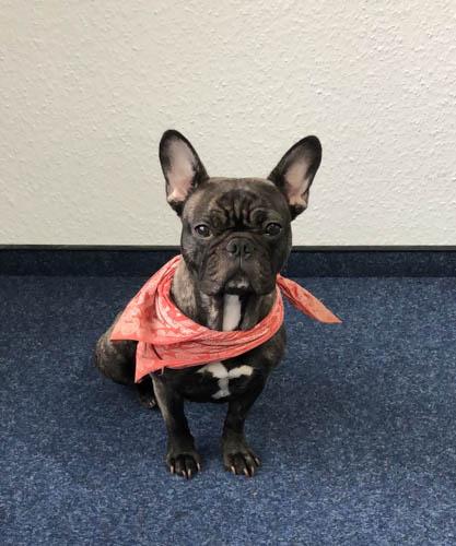 Emmy, the Cloudideas dog