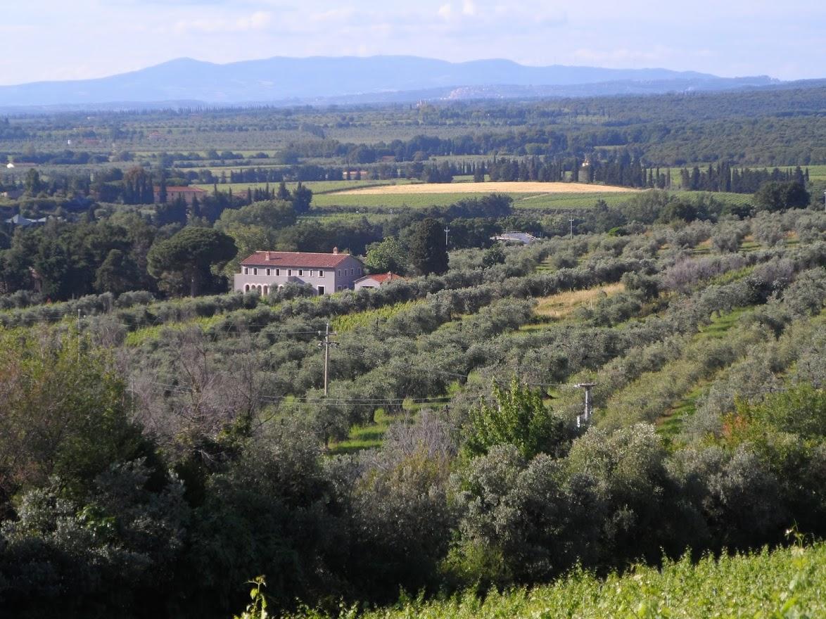 Familie, Tradition und Leidenschaft sind die Zutaten der handverlesenen Weine, des Bio-Olivenöls und des liebevollen Agrituismo.