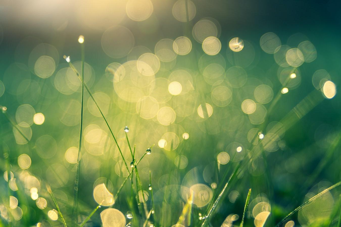 Grön värld, temabild