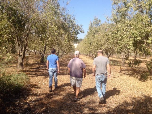 men touring in almond field
