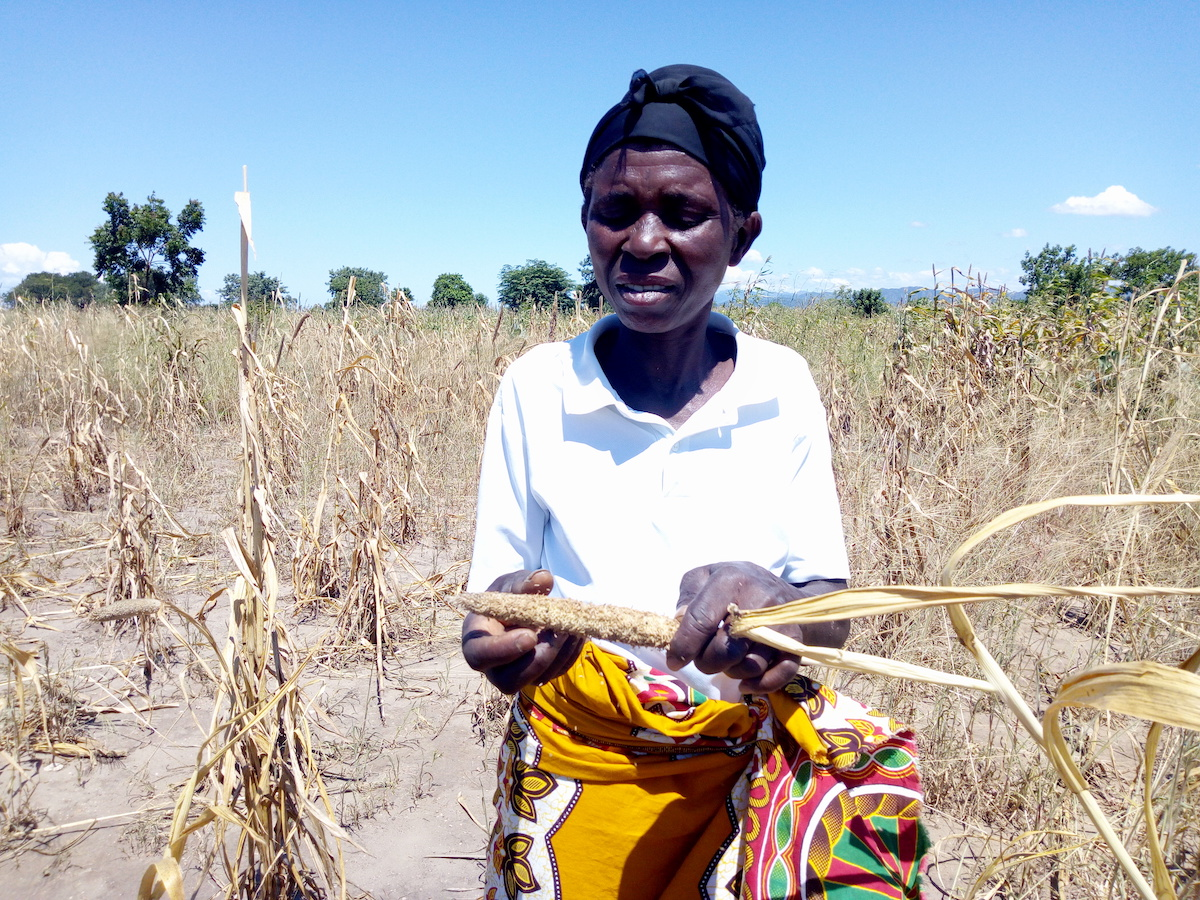 """Malawi's dry spells - The tale of an """"irreversible"""" curse"""