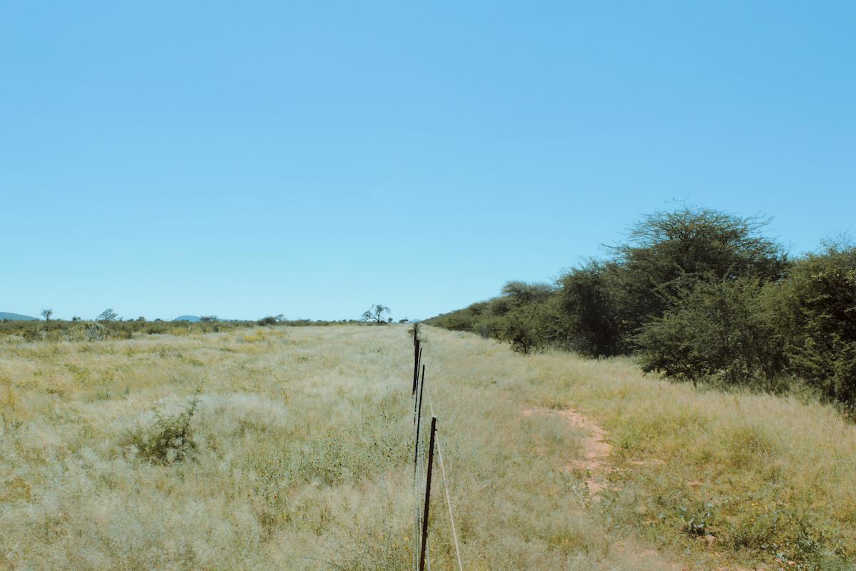 Regenerative Agriculture: A Lifeline for Livestock Farming