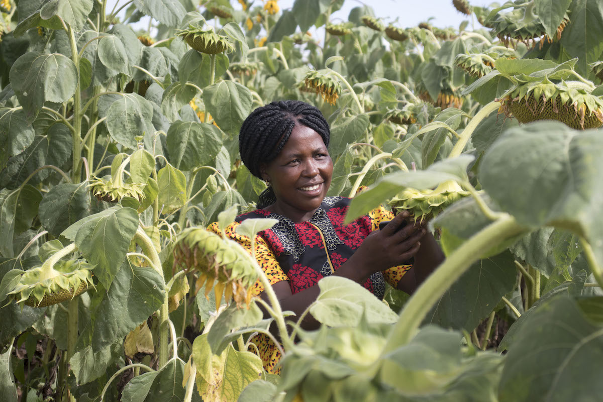 Drought-resilient Crops: A Ray of Hope for Small-holder Farmers in Zimbabwe