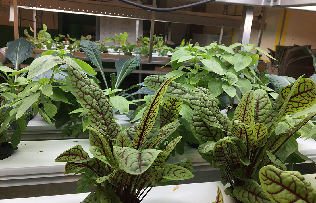 Numerous sprawling plants growing under heated lamps.