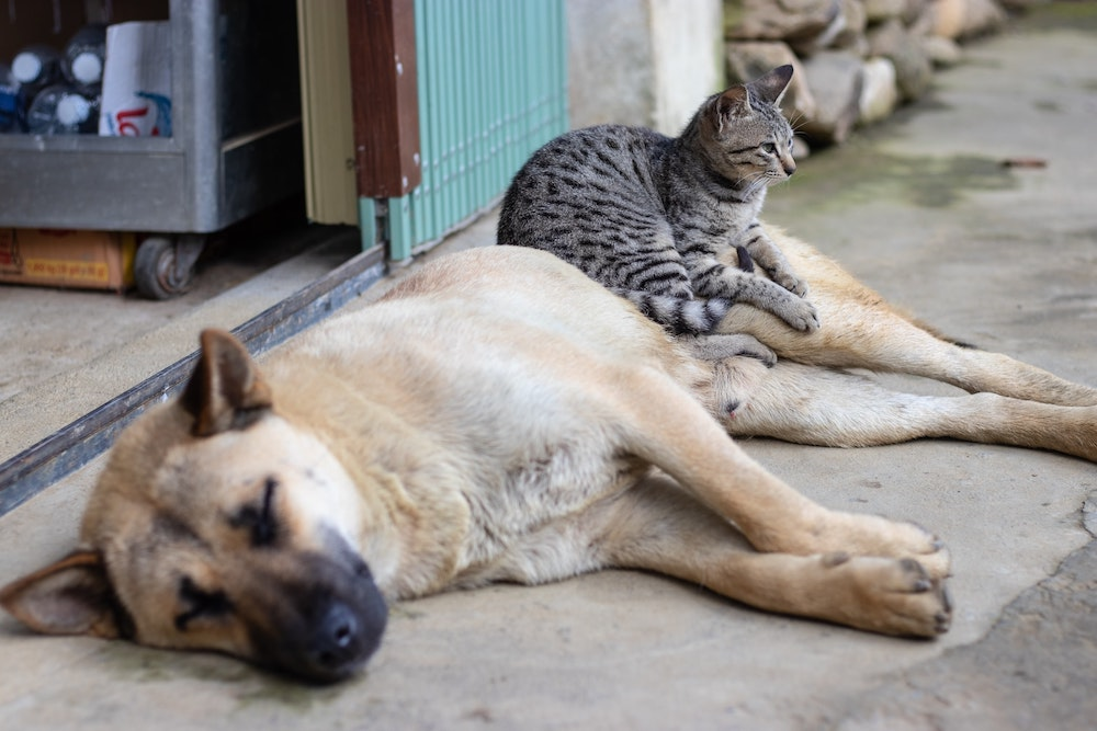 Everything You Need To Know About Adopting A Pet From Another EU-Country