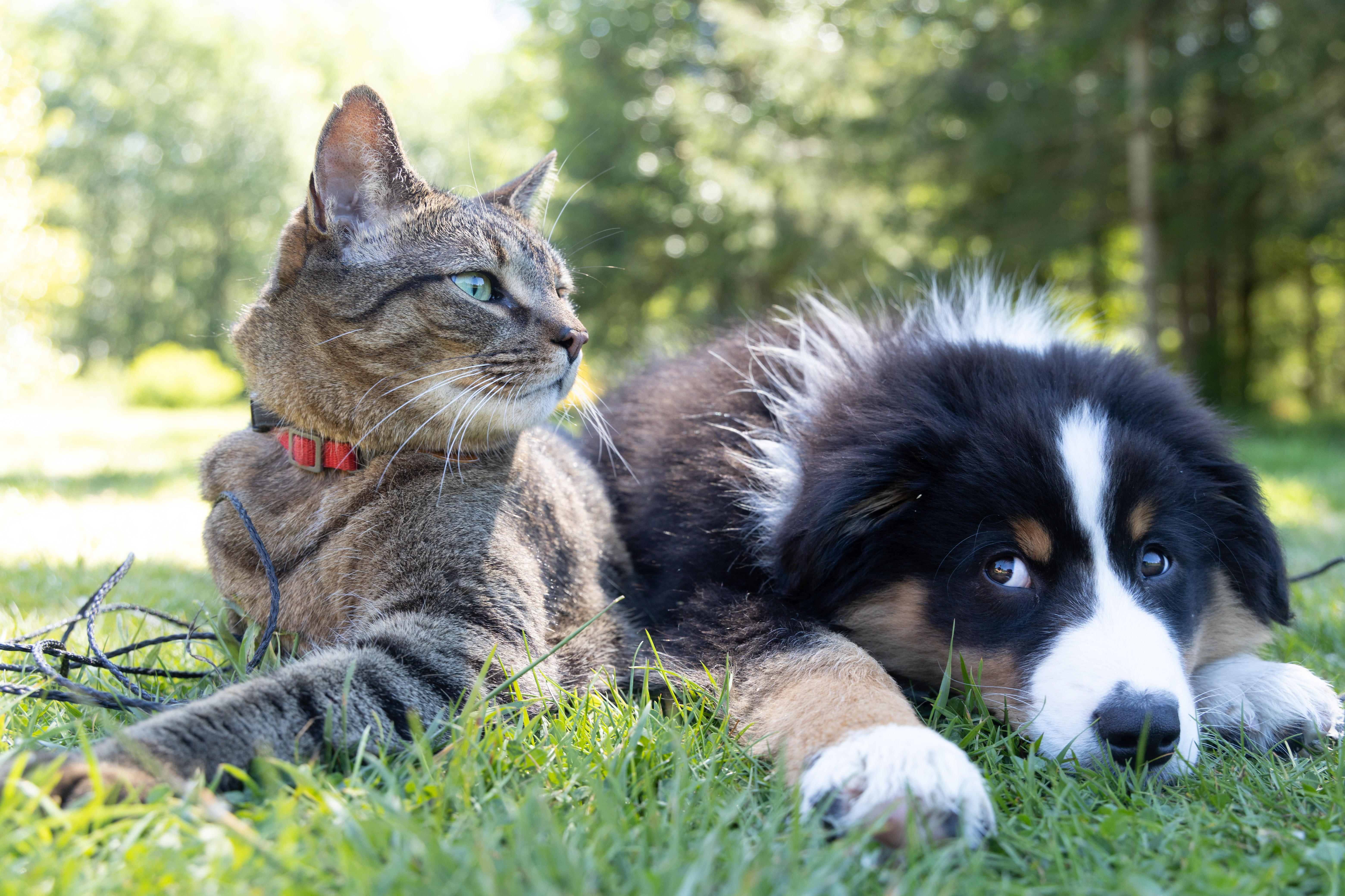 10 Guiness World Records achieved by Cats and Dogs