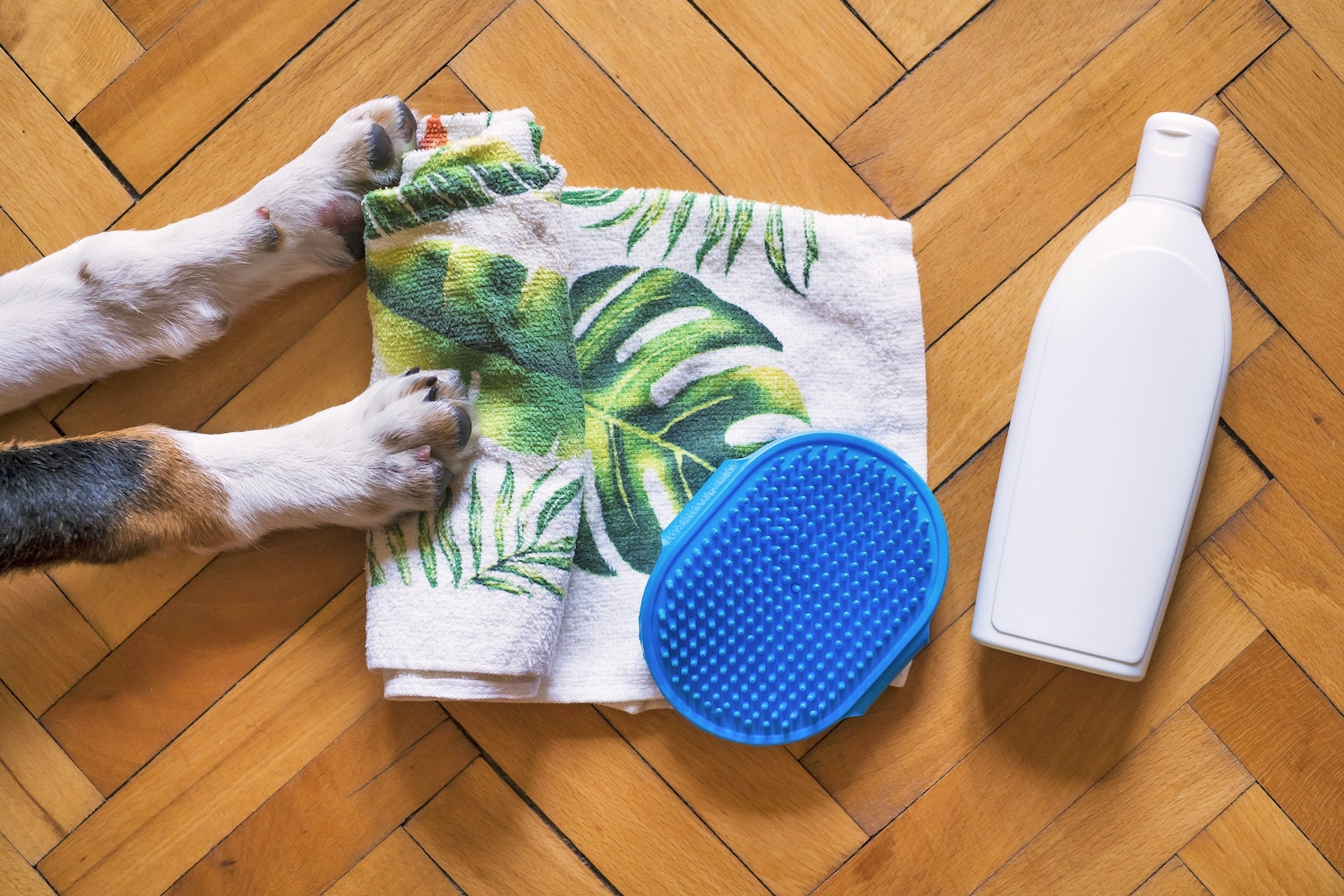 5 Dog Bathing Tips That Make Everyone's Life Easier (Your Dog's Life Included)