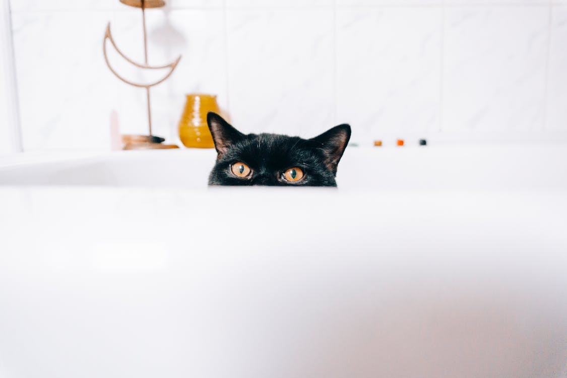 5 Cat Bathing Tips