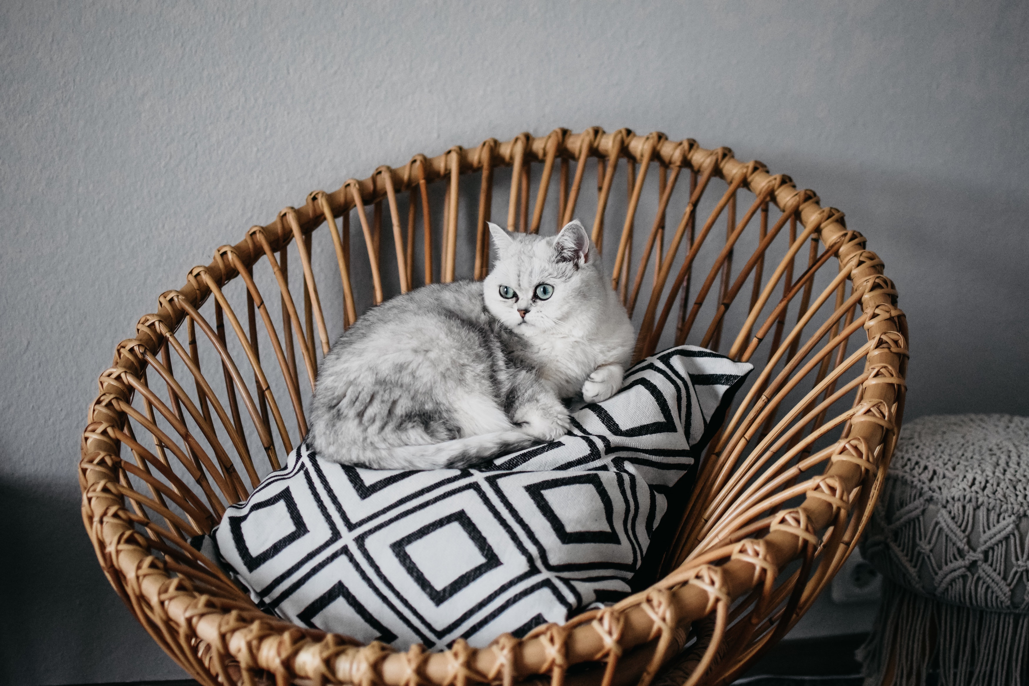 Health Insurance Guide For Cats