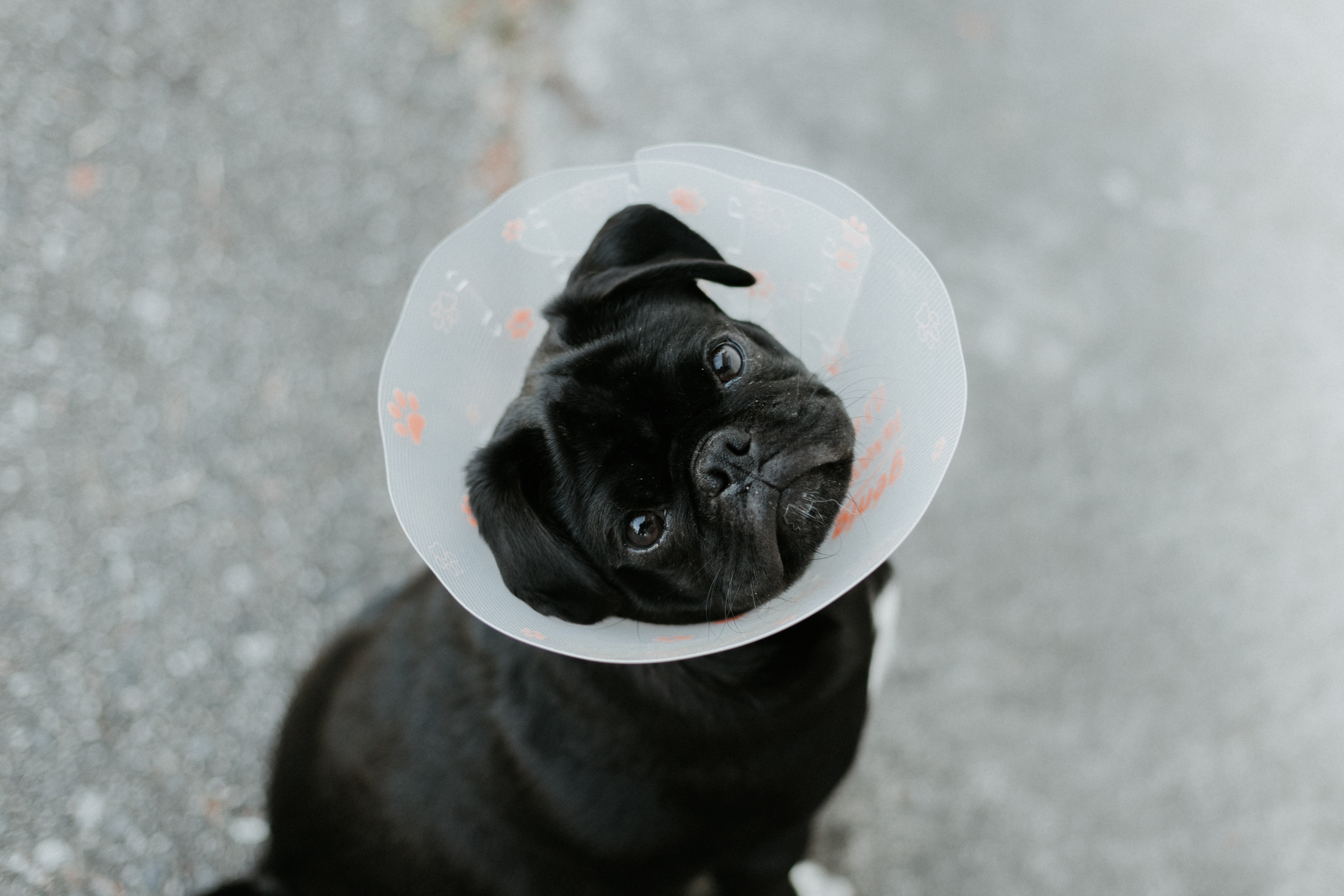 Health Insurance Guide For Dogs