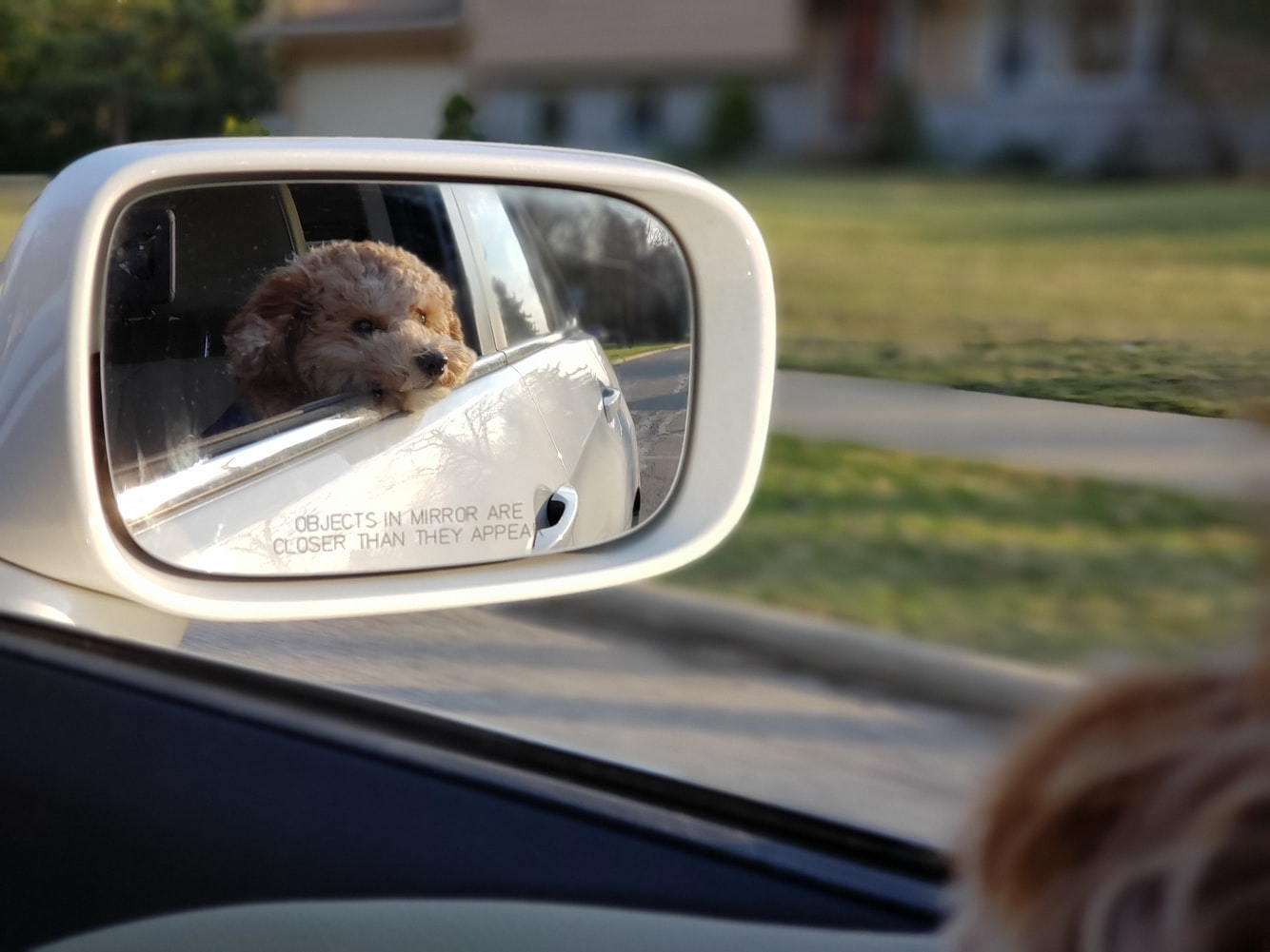 Traveling In The Car With Pets