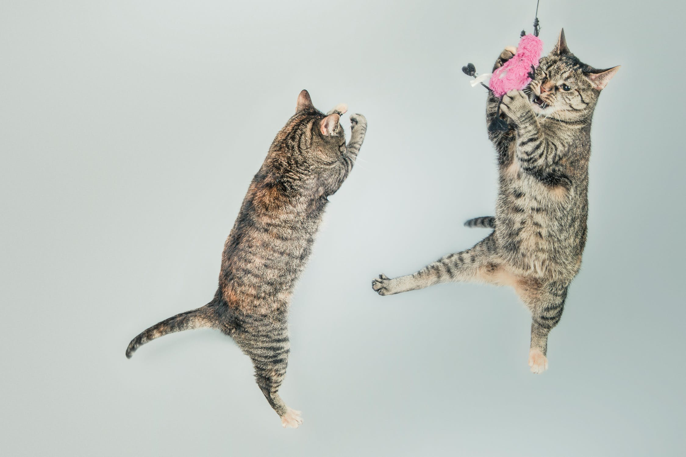https://images.pexels.com/photos/4602/jumping-cute-playing-animals.jpg?auto=compress&cs=tinysrgb&dpr=2&h=750&w=1260
