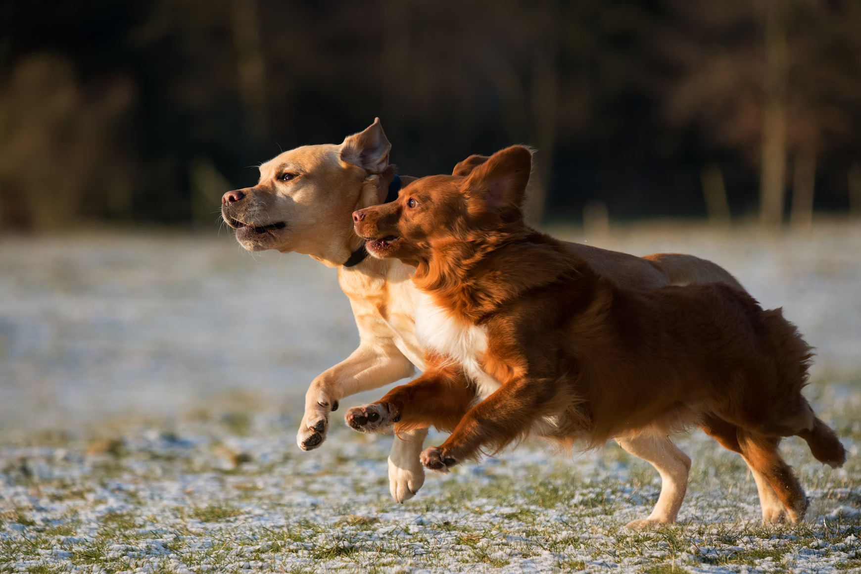 Activity Tracking For Cats and Dogs