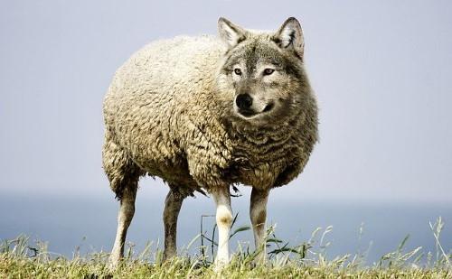 Les ETF Réduisent le risque : loup en agneau