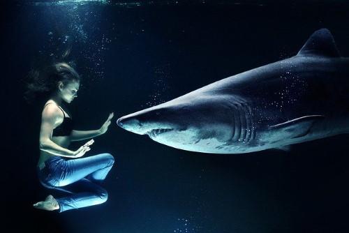 Les ETF risqués ? Femme qui nage avec un requin