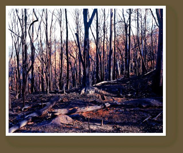 Victorian Black Saturday Bushfires