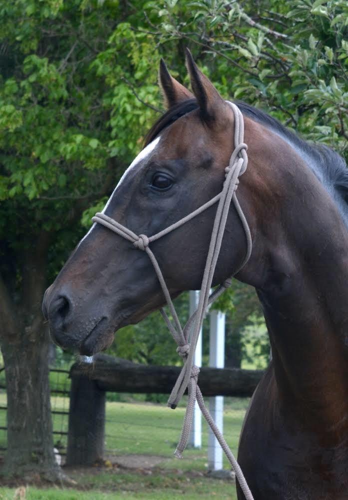 Close up photo of horse