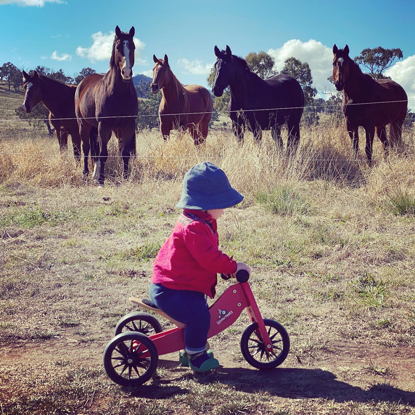 toddler riding trike as group of horses watch