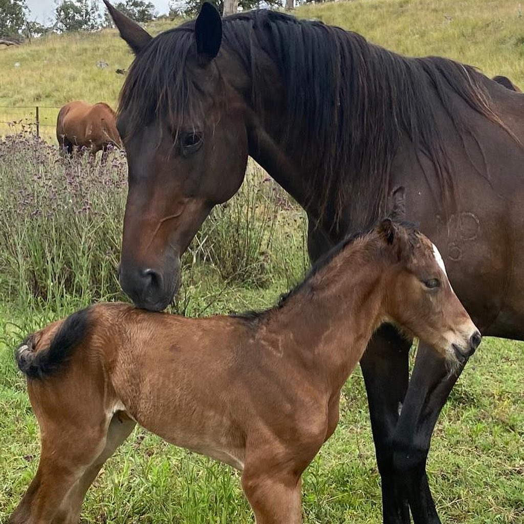 Mother horse and new born foal