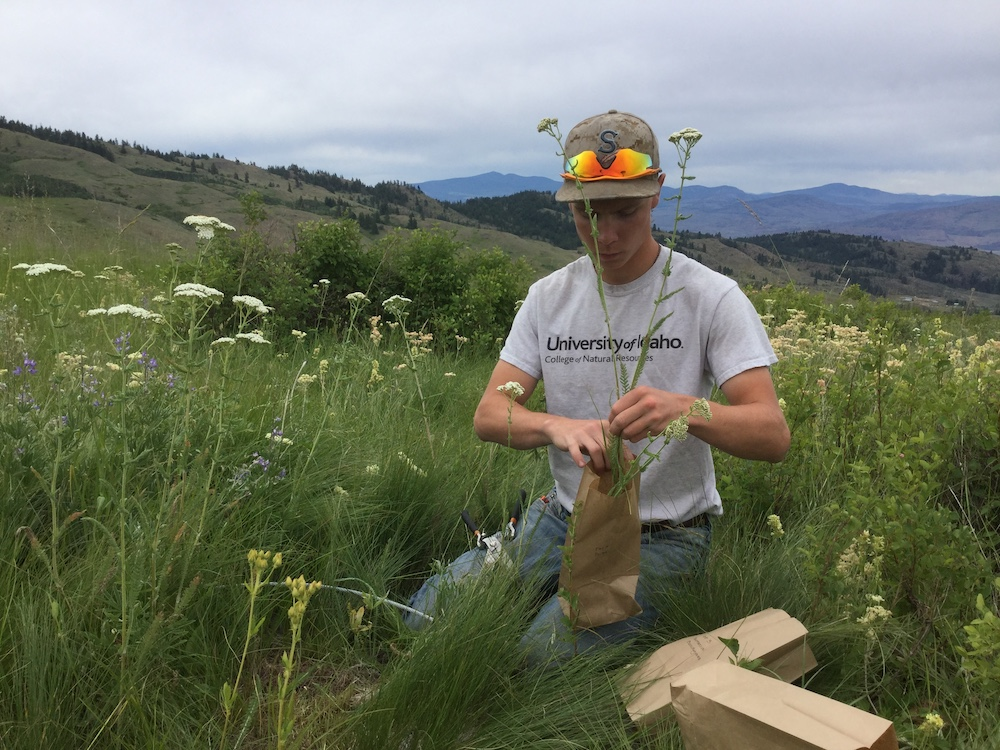 A summer intern performs a range inventory to assess the plant community and its health