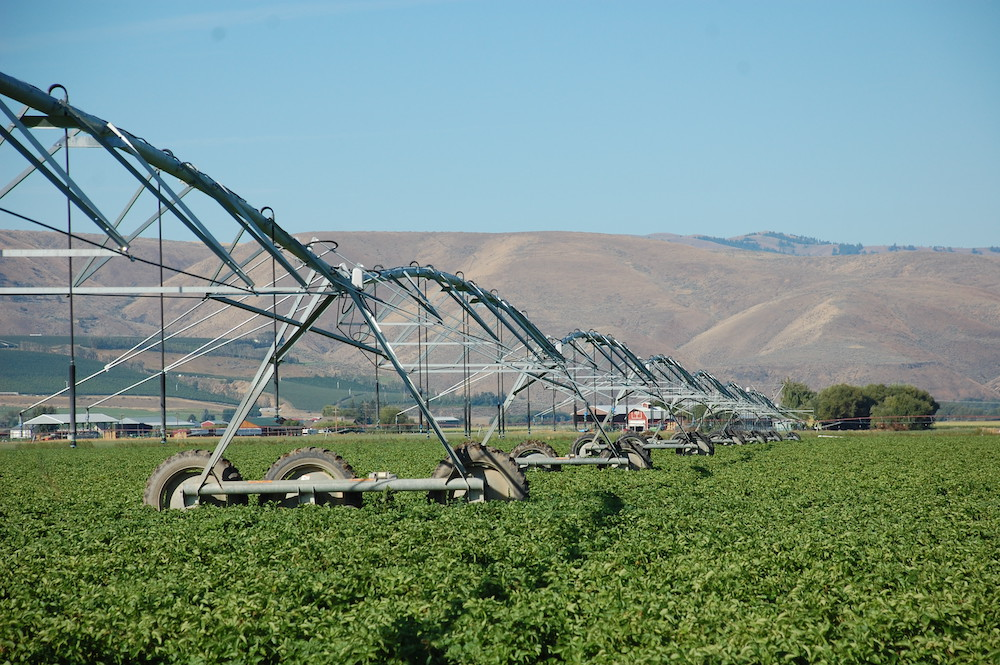 Conversion from rill irrigation to the more efficient sprinkler systems, a mainstay of the KCCD program