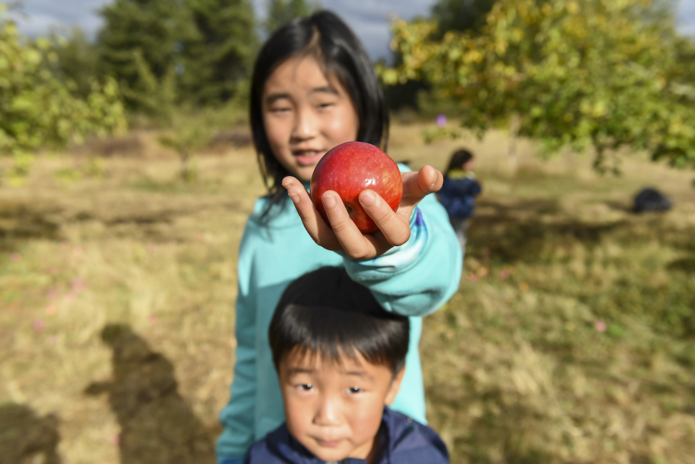 Brother and sister pick apples on a glean with Harvest Pierce County