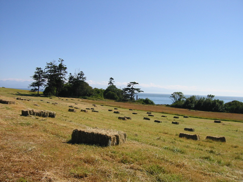 Island hay production