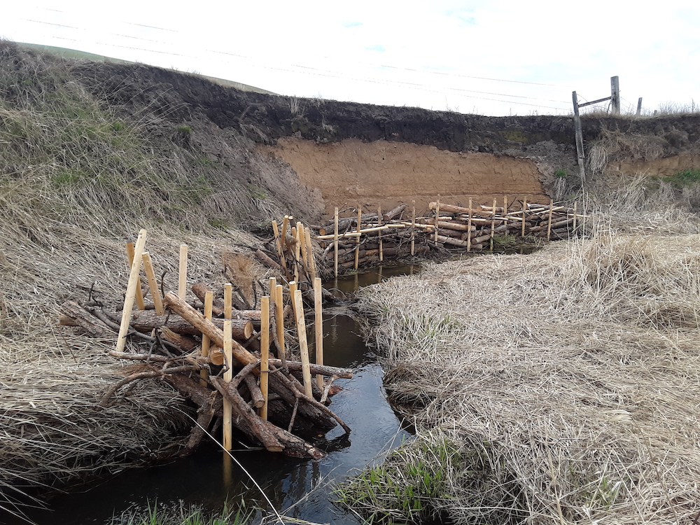 Protecting streambank from further erosion