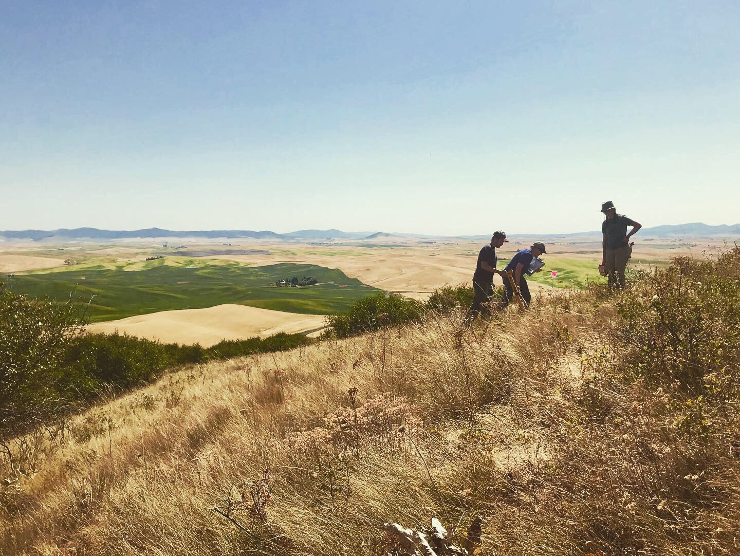 Palouse CD staff surveys Palouse Prairie remnants on one of the last remaining intact prairies, Steptoe Butte.