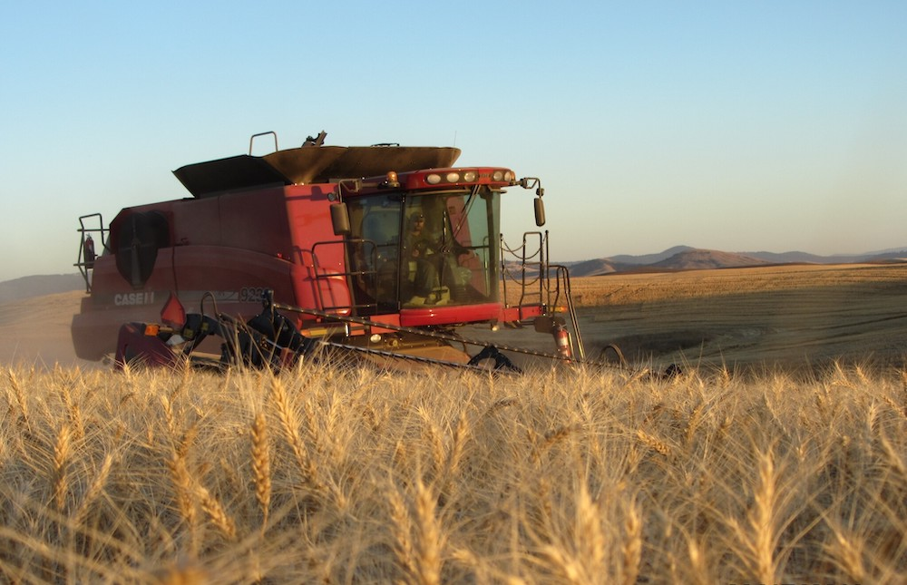 Harvesting a direct seed operation