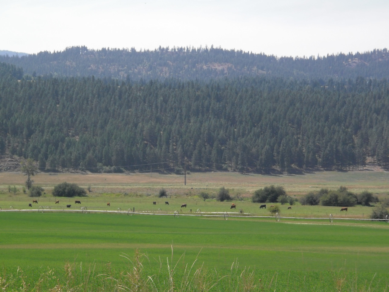 Farming in Stevens County