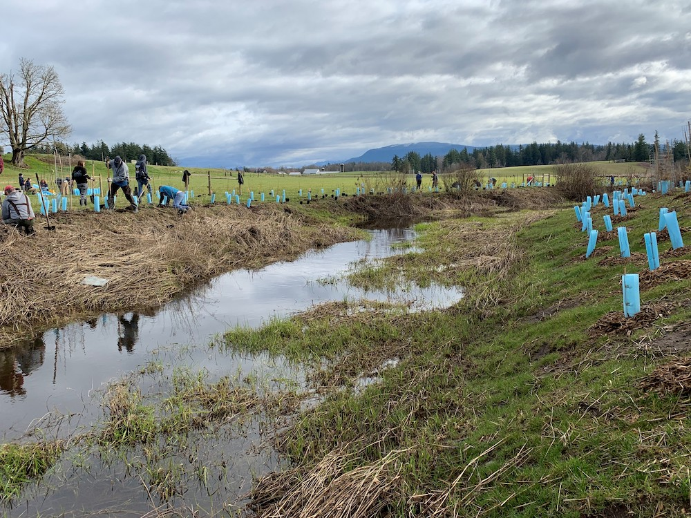 Volunteer work parties support salmon habitat improvements, promote conservation values and nurture community connection to the land
