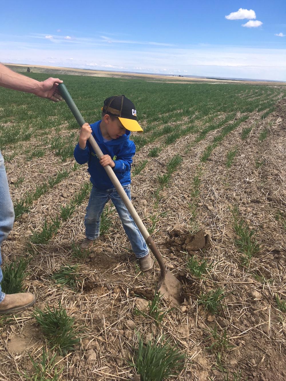 Planting a windbreak for future generations