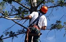 Arborists Insurance