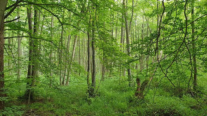 foreste certificate da cui vengono ricavati i materiali per le camerette