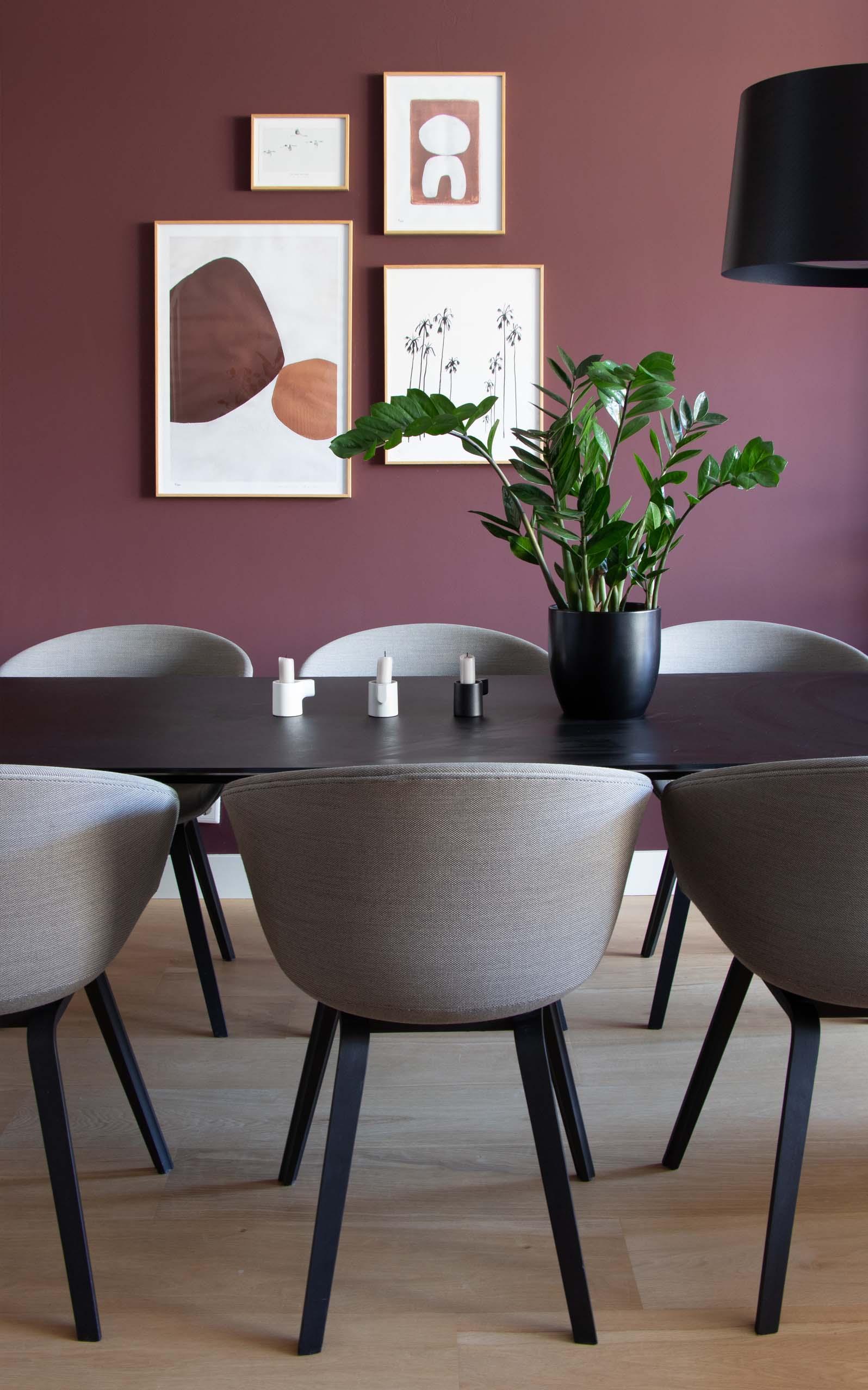 Zamioculcas makkelijke sterke kamerplant