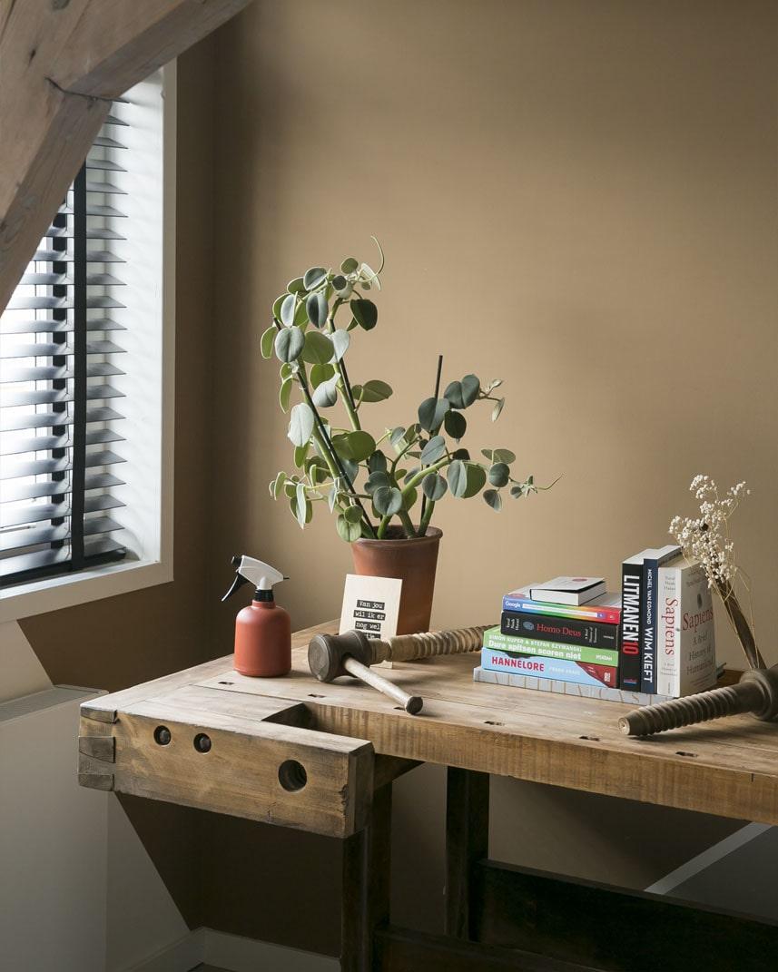 Peperomia Hovaria makkelijke bijzondere kamerplant