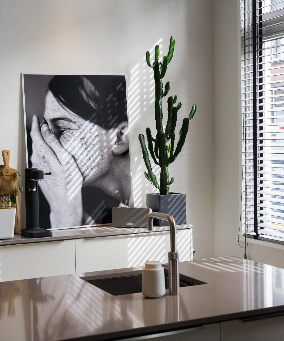 Euphorbia cowboycactus makkelijke en sterke kamerplant