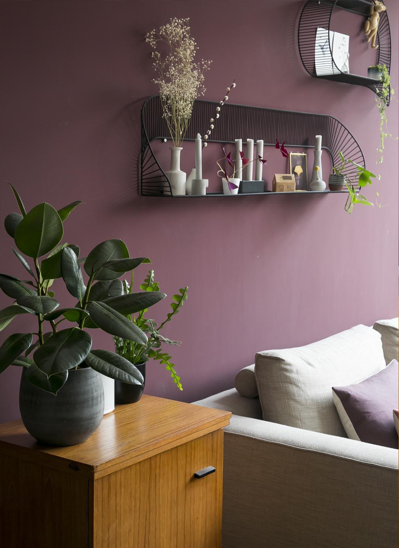 Ficus elastica: een makkelijke sterke kamerplant voor je woonkamer