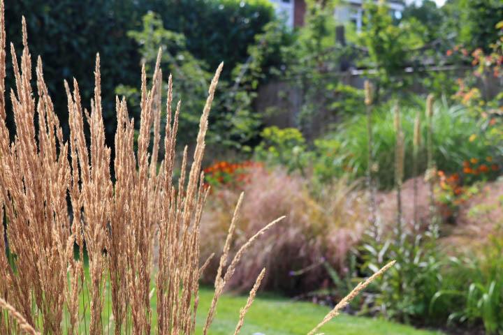 Contemporary garden with grasses