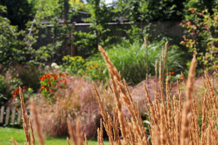 Contemporary planting with grasses