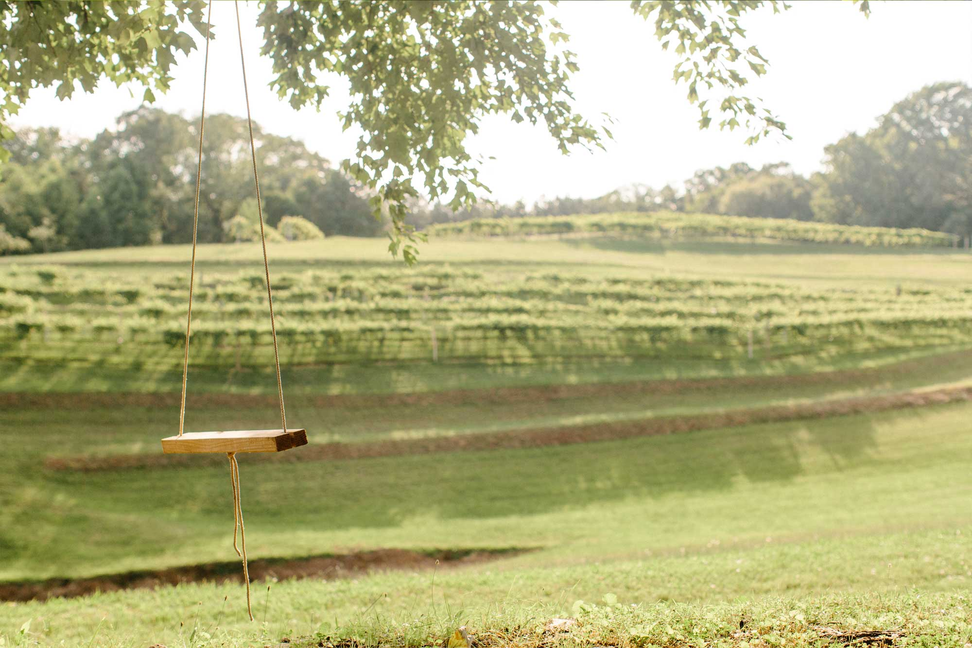 A swing at the vineyard