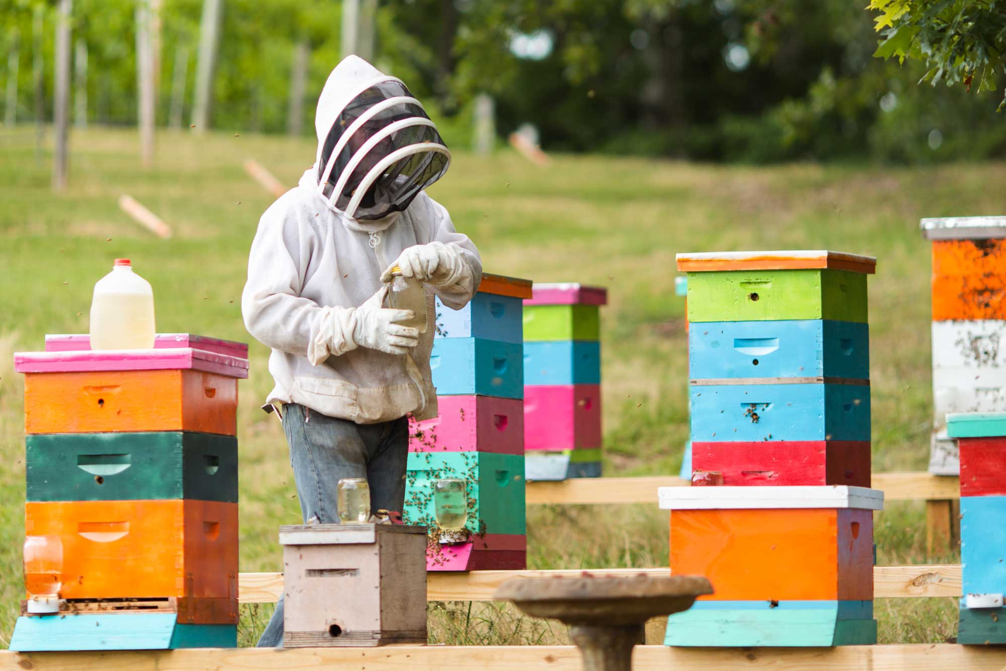 A man in a beekeeper's hood with bee hives