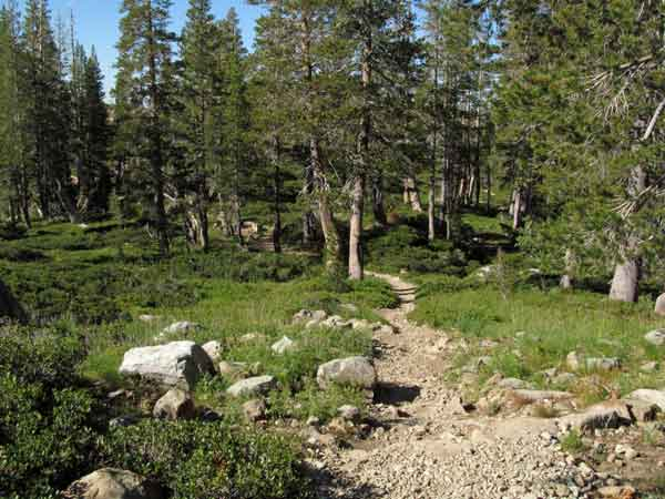 Trails in the Lakes Basin are meandering and easy for everyone. This gravel trail is near Silver Lake.