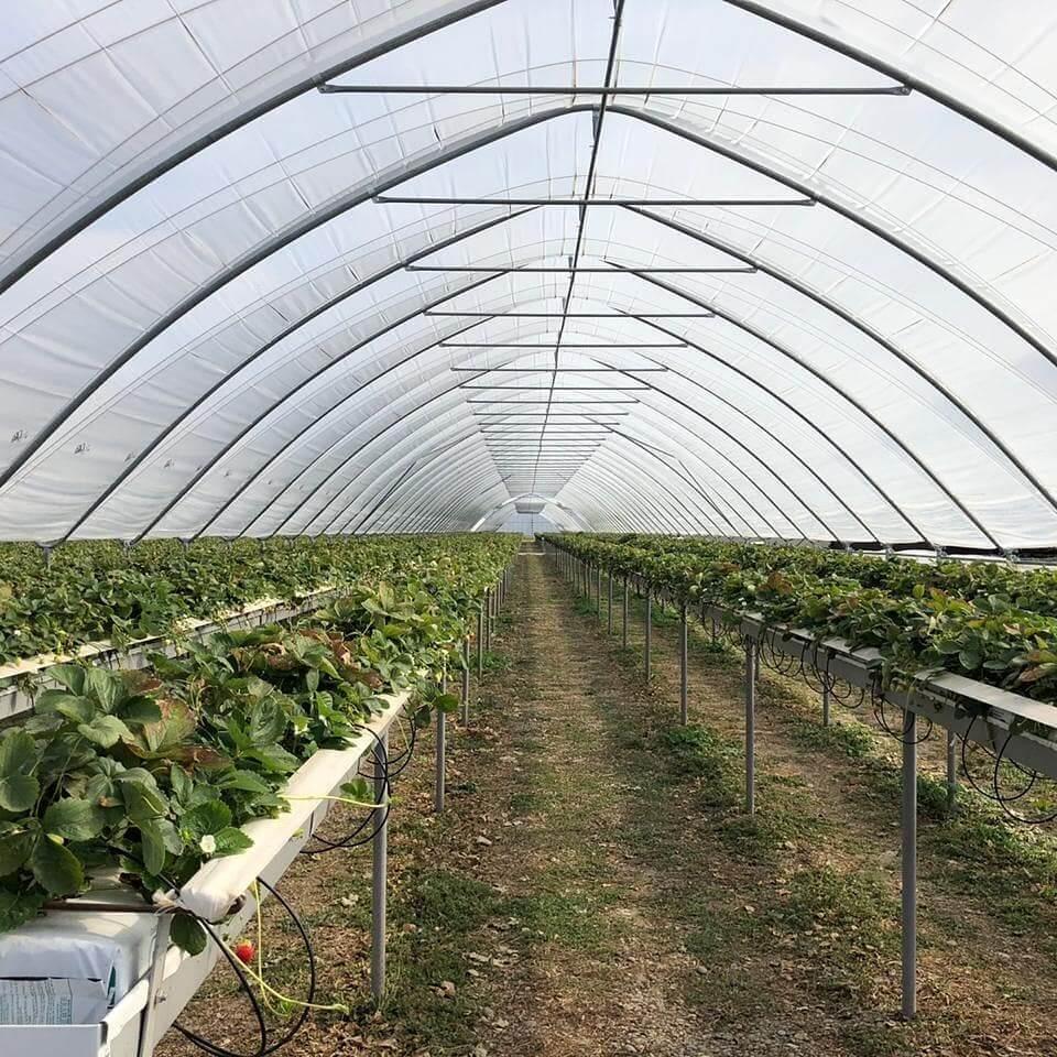 туннели для выращивания ягод