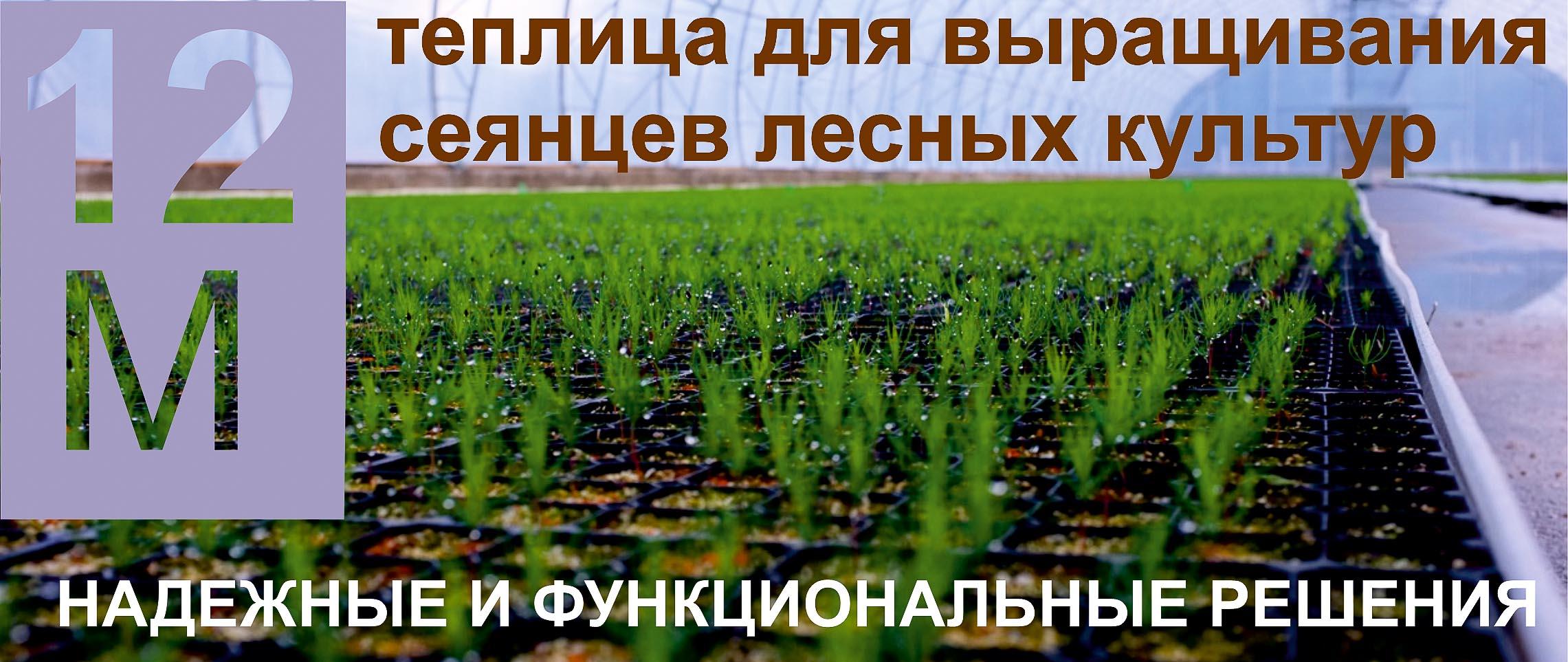 Теплица для выращивания сеянцев хвойных растений